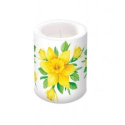 Daffodils in Bloom 10x12cm