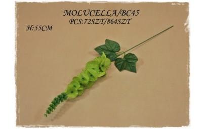 Molucella 60cm