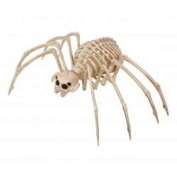 Szkielet tarantuli 35x20cm