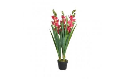 Orchidea w doniczce 3...