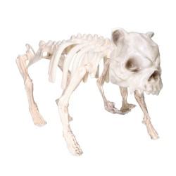 Sztuczny szkielet psa kości 22x42cm
