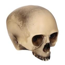 Czaszka halloweenowa plastikowa bez brody 20cm