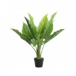 Roślina w doniczce 73x74cm
