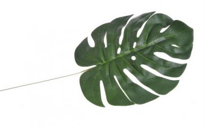 Liść aloha 59cm