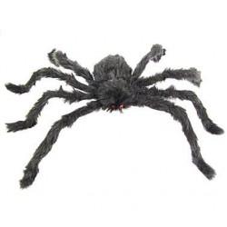Duży pająk włochaty...