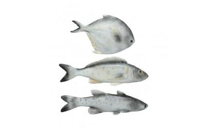 Ryba szara różne wymiary