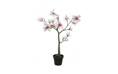 Magnolia w doniczce jasno różowa duża