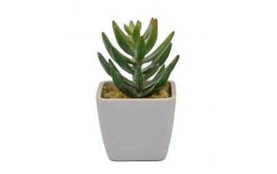 Mini kaktus w doniczce 5x9cm